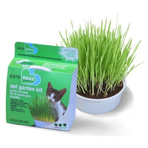 Van Ness Oat Grass Garden Kit (Pack of 6)