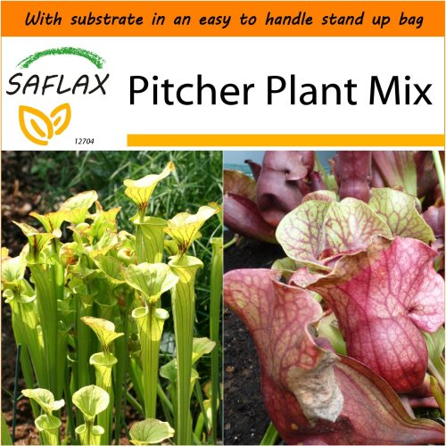 SAFLAX Garden in the Bag - Pitcher Plant Mix - Sarracenia - 10 seeds
