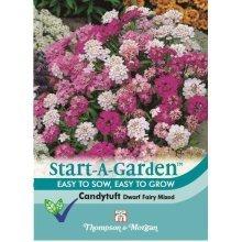 Thompson & Morgan - Start-A-Garden Flower - Candytuft Dwarf Fairy Mixed - 250 Seed