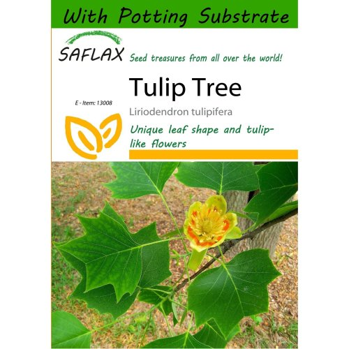 Saflax  - Tulip Tree - Liriodendron Tulipifera  - 20 Seeds - with Potting Substrate for Better Cultivation
