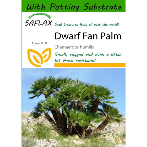 Saflax  - Dwarf Fan Palm - Chamaerops Humilis - 10 Seeds - with Potting Substrate for Better Cultivation