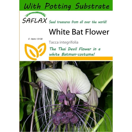 Saflax  - White Bat Flower - Tacca Integrifolia - 10 Seeds - with Potting Substrate for Better Cultivation