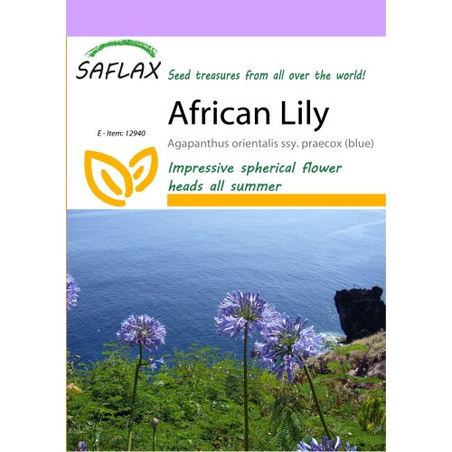 Saflax  - African Lily - Agapanthus Orientalis Ssy. Praecox (blue) - 50 Seeds