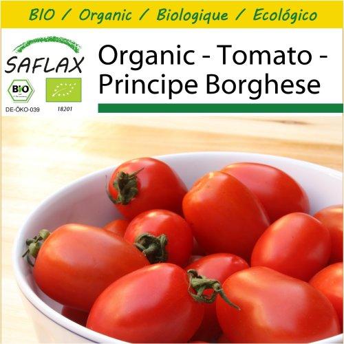 SAFLAX Potting Set - Organic - Tomato - Principe Borghese - 10 certified organic seeds  - Solanum