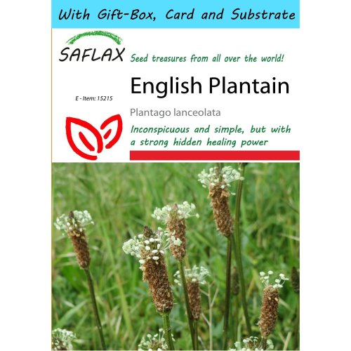 Saflax Gift Set - English Plantain - Plantago Lanceolata - 100 Seeds - with Gift Box, Card, Label and Potting Substrate