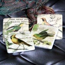 Ceramic Coasters Tiles, Bird Theme