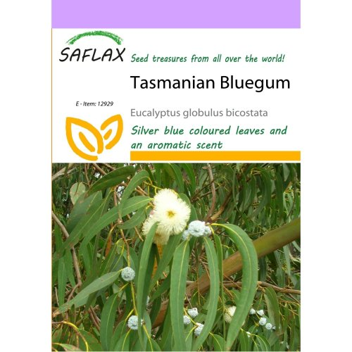 Saflax  - Tasmanian Bluegum - Eucalyptus Globulus Bicostata - 100 Seeds